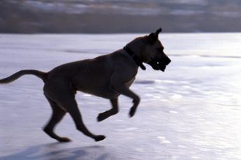 Come proteggere cani e gatti dal gelo di Burian