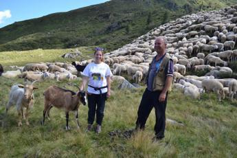 Pastori volontari per qualche giorno, alla scoperta del mestiere