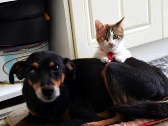 Un cane o un gatto in una casa su 3, la metà preso al canile