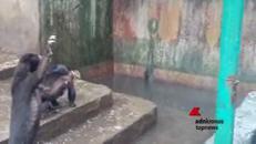 Indonesia, orsi 'disperati' chiedono cibo ai turisti