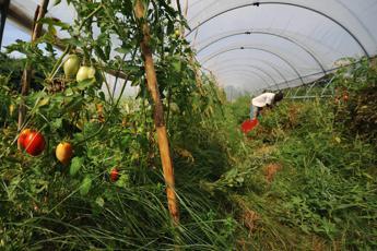 Cia, 'Made in Italy' cresce con il lavoro degli stranieri
