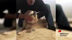 Smiley, nato cieco, viene adottato e diventa cane da terapia