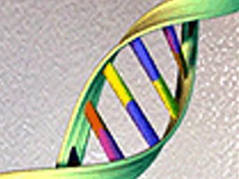 Ricerca, uomini e donne diversi per 6.500 geni