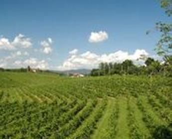 Friuli Venezia Giulia: al via corsi per operatori Strada del Vino e Sapori