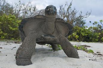 Testuggini giganti e pipistrelli, il progetto di tutela alle Seychelles parla italiano