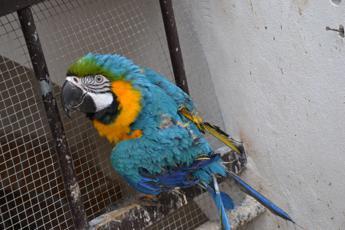 Animali sequestrati e confiscati tra vuoti normativi e di finanziamenti