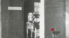 'Animalia' è il titolo di una mostra collettiva alla galleria Pio Monti a Roma