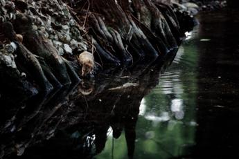 Salute: Lorenzin, bimbo morso da topo al parco, Roma vinca sfida pulizia