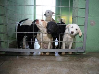 Dalla vivisezione al traffico di cuccioli, la Lav compie 40 anni