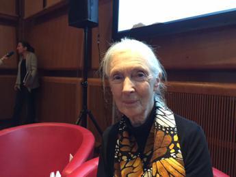 La primatologa Jane Goodall: Abbiamo già quasi distrutto il nostro futuro