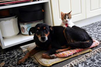 10 regole per cani e gatti alle prese con il freddo