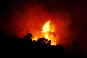Australia, centinaia di incendi devastano la costa orientale