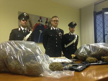 Cremona, carabinieri sequestrano 38 chili di marijuana, un denunciato