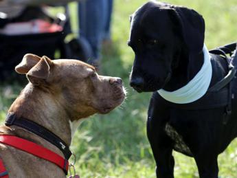 Scoperto l'ormone dell'aggressività nei cani