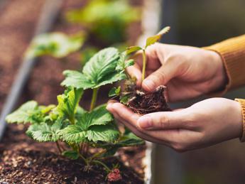 'Dal piatto alla pianta', trasformare la casa in giardino con il riciclo