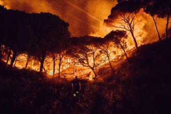 Incendi, almeno 15 anni per ricostruire i boschi