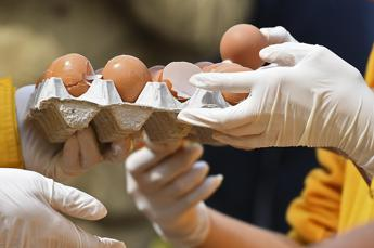 More tainted egg products found in Italy