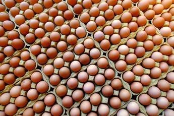 Uova all'insetticida, Coldiretti: In Italia no rischi ma attenzione a dolci e pasta