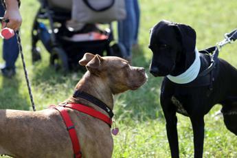Più attenzioni per Fido: è boom di dog sitter, massaggiatori e toelettatori cani