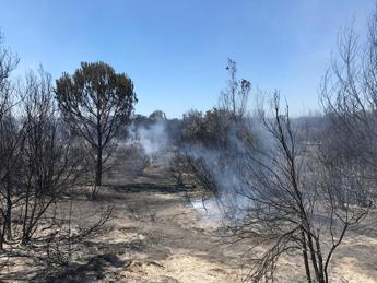 Lazio in fiamme, da inizio 2017 sono 5.213 gli ettari bruciati