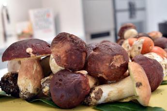 Le virtù di funghi e tartufo