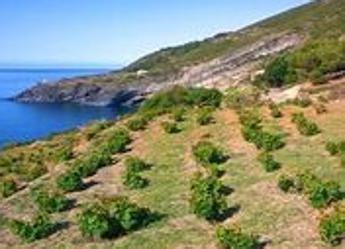 Al via la prima edizione del 'Pantelleria Doc Festival'