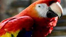 Spuntata la cresta del pappagallo Flex