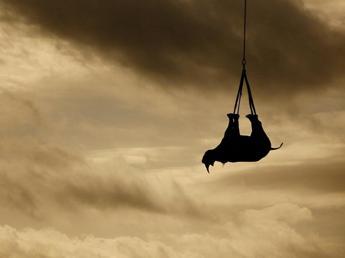 E' il World Rhino Day, specie a rischio per bracconaggio