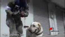 Frida il cane eroe che ha salvato 52 vite