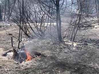 Dossier dei Verdi su caldo, incendi e siccità: in fumo 125mila ettari