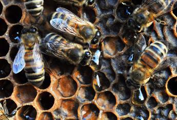 Contaminato da pesticida il 75% del miele