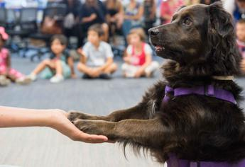 World Animal Day, a scuola con il pet grazie a Mars Italia