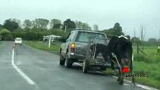 Mamma Mucca disperata, le portano via i vitellini
