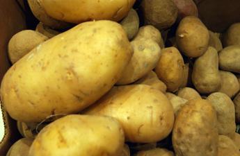 Patata di Bologna Dop, crescono produzione e superfici certificate