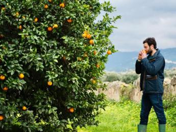 Adotta un albero da frutta, al via crowdfunding per start up Biorfarm