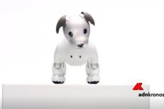 Torna Aibo, cane robot