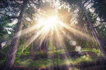 Foreste, via libera a Testo Unico