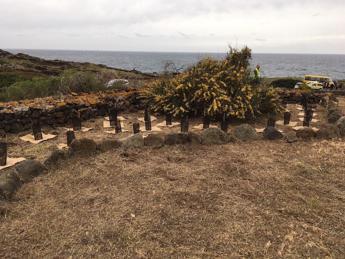 250 mirti per Pantelleria