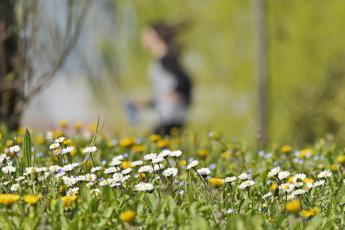 Aprile mese 'nero' per allergici