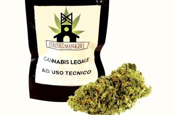 Piadina alla marijuana come bonus per i dipendenti