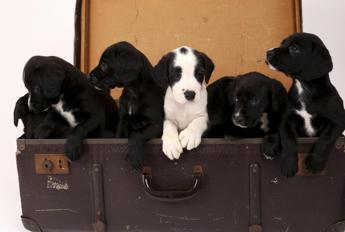 Cani irresistibili a 8 settimane