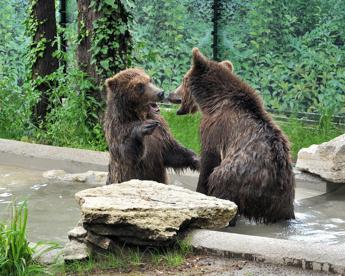 Gianni, Sam e Mary salvi: tre orsetti trovano casa al Bioparco di Roma