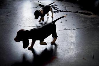 Abbaiavano troppo, bruciati vivi due cani