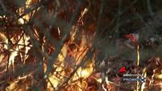 Incendi, l'Italia brucia