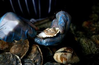 Mangia ostriche crude e muore