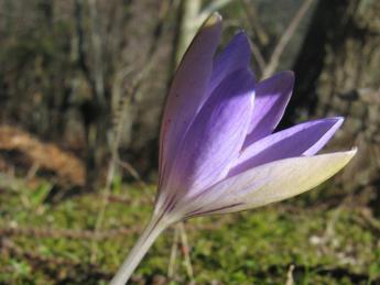 Censita flora dell'Elba, a rischio la biodiversità