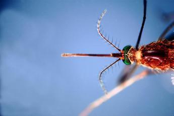 Zanzare letali per l'uomo: 725mila morti all'anno