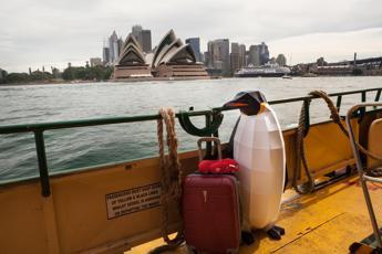 Australia: per studio o lavoro è meta di 12mila italiani, apre infopoint a Milano