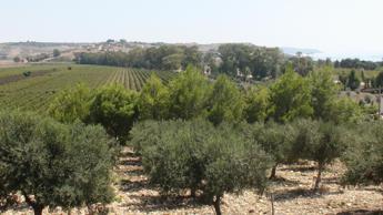 Al via Mandrarossa vineyard Tour, racconto di storie e territori di successo