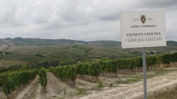 Gaslini Alberti: Doc 'Terre di Pisa' importante per territorio
